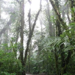Sant Elena Cloud Forest